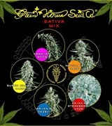 Green House Sativa Mix