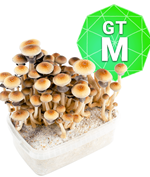 Golden Teacher Growkit - Medium