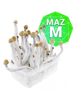Mazatapec Growkit - Medium
