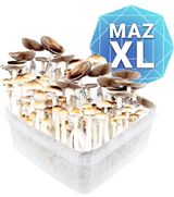 Mazatapec Growkit - XL