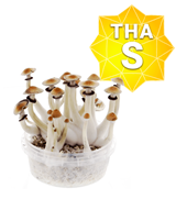 Thai Growkit - Small