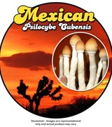 Mexican - Psilocybe Cubensis