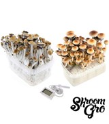 ShroomGRO DuoPack – Mexican and Golden Teacher