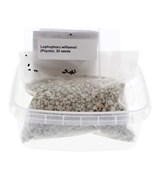 Seed Germination Kit, Trichocereus pachanoii