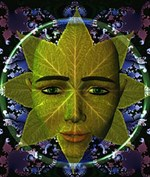 Usage of Salvia Divinorum by Mexican Shamans