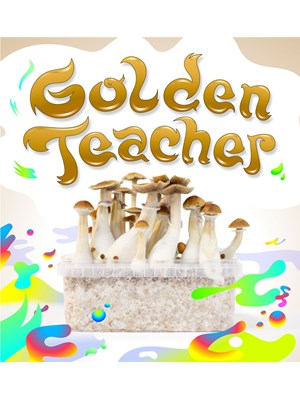 Golden Teacher - Magic Mushroom Growkit